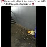 【炎上】築地移転の豊洲市場でタバコ投げ捨て大量発生 / 勝手に喫煙する市場関係者「ニコチン汚染が懸念」
