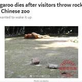 「起きろ!」寝ていたカンガルー、見学者の投石により死亡 中国の動物園で